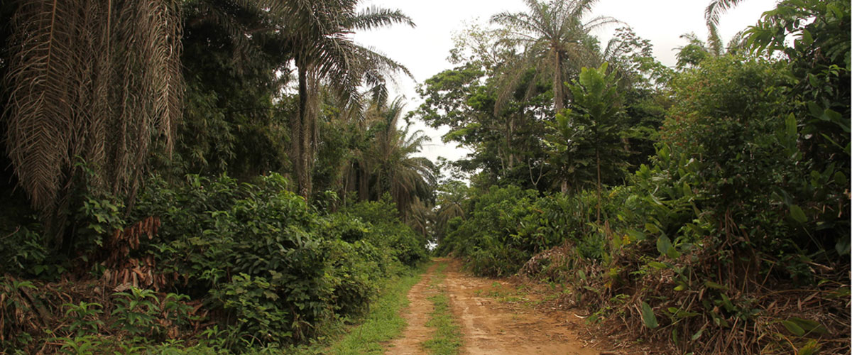 Expertise in Sustainable Palm Oil Project - Plantations